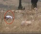 حرائق الحقول.. فيديو يكذّب إسرائيل ويدفعها للاعتراف